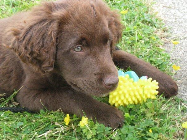Maeberry Puppy